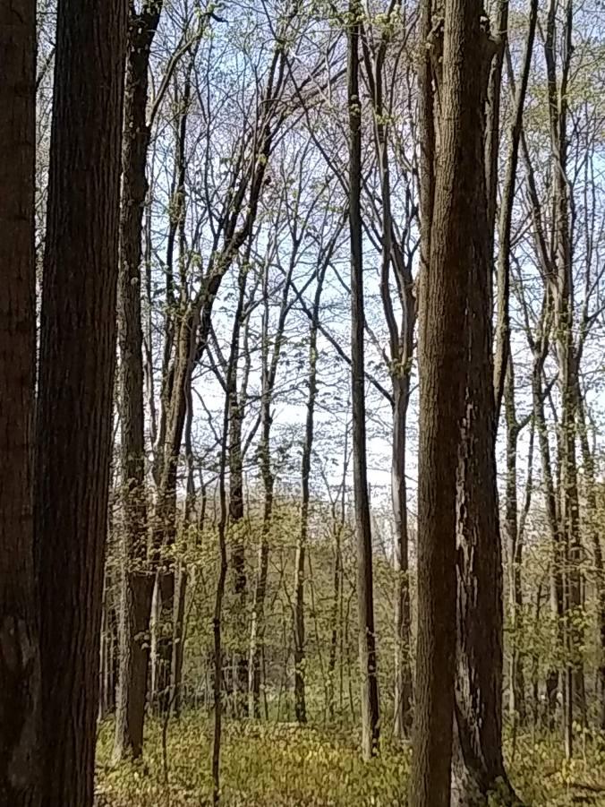 bratt woods #1