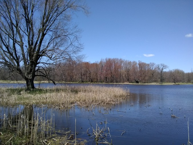 jackson marsh 2