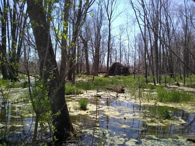 jackson marsh 3