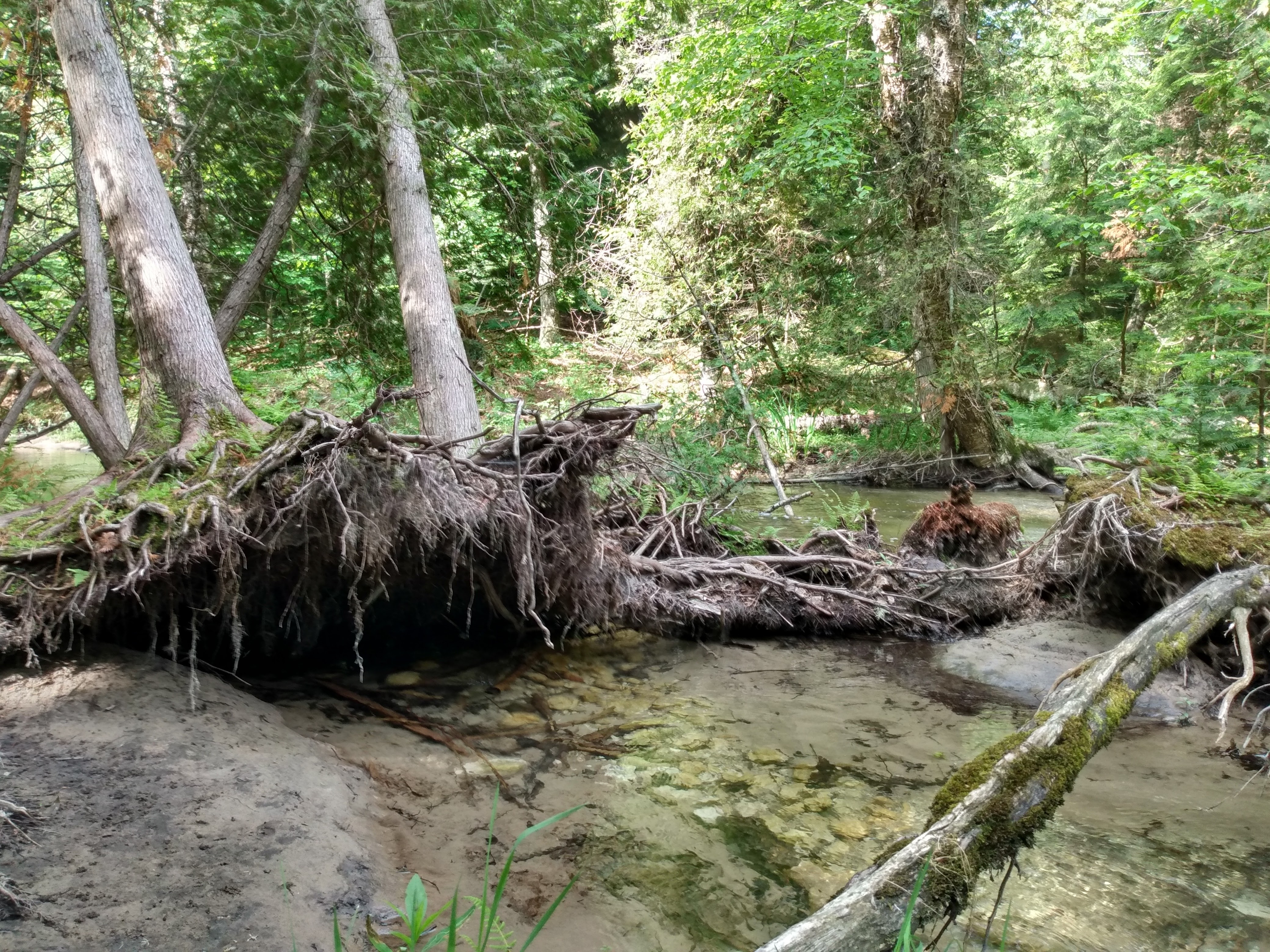 heins creek 3