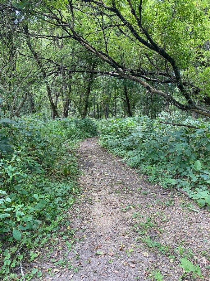 turtle creek trail